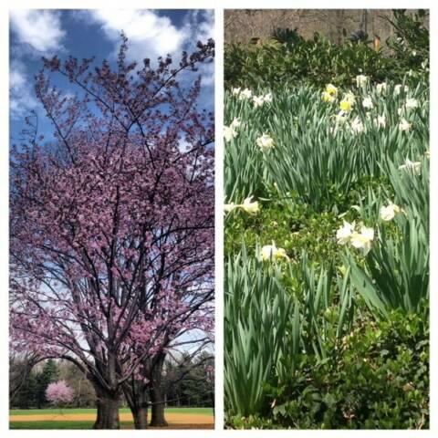 primavera ny