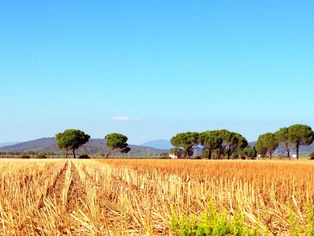 L'Andana campo