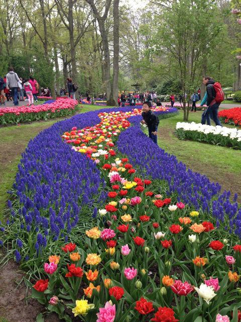 Corredores de flores impressionantes no Keukenhof