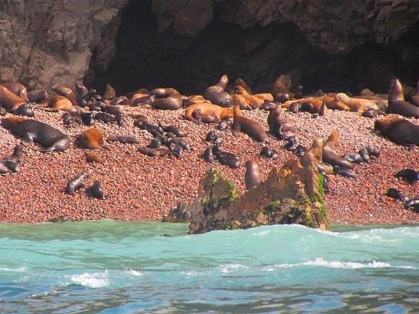 Tour pelas Islas Ballestas, no Peru