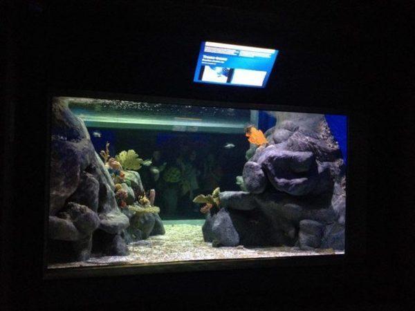 O novo Aquário Marinho do Rio