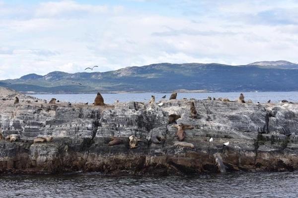 Lobos-marinhos