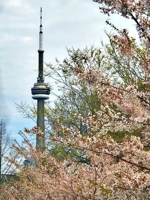 Lindo a vista do parque florido para a CN Tower