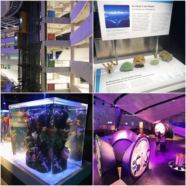 novo museu de Miami