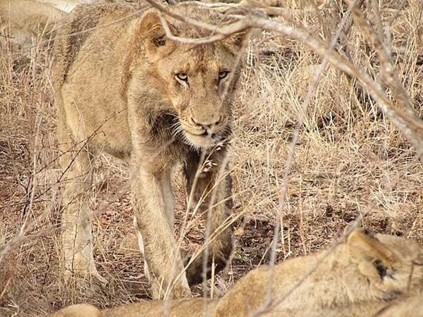 o dia em que me perdi na savana africana