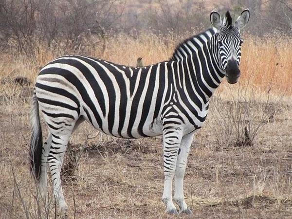 me perdi na savana africana