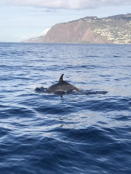 o que fazer na Ilha da Madeira 2