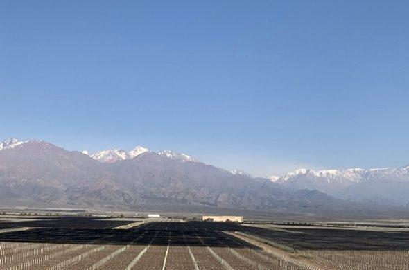 5 passeios na Rota do Vinho, em Mendoza