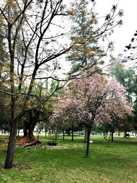 início da primavera no hemisfério sul