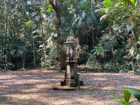 Trilha na Floresta da Tijuca