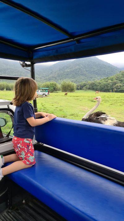 Portobello safari