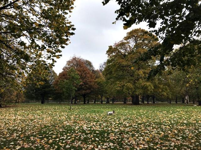 parque kensington